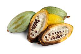 Raakakaakaohedelmä